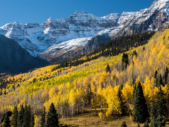 Fall Color, Colorado